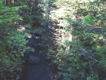 Unmaintained Trail