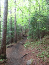 The Trail to Marcy Dam- beautiful and easy.