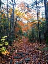 Mount Marshall: Calamity Brook Trail
