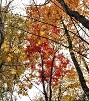 Fall foliage!