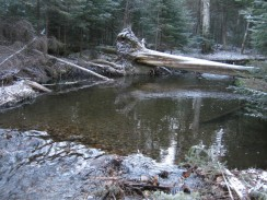Log Crossing - Photo Credit - www.hubpages.com