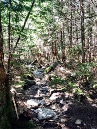 Saddleback and Basin