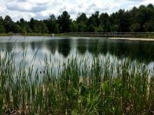 Wild Center - Pond Walk