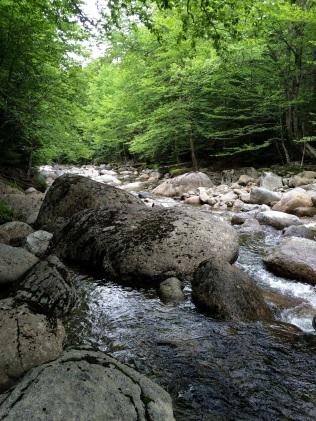 Phelps Trail - John Brook Bank