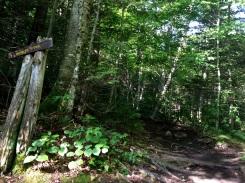 Trail to Algonquin Peak (Trail 64)