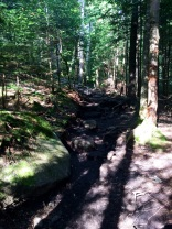 Trail to Algonquin Peak
